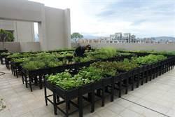 防疫宅興起 鄉林:陽台及頂樓綠利用率大增