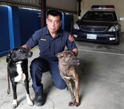 愛犬突衝樹林 淡水警尋獲採筍司機遺體