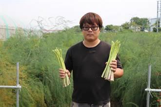 去年拿下小番茄競賽佳作 青農王彥鈞也種蘆筍