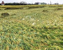 南部522豪雨成災 屏東縣農損3700萬高居第一