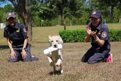 超萌緝毒犬 關務署開放報名寄養家庭