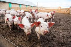 陸豬價連13周下降 今年會重回「10元時代」?