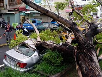 南市強降雨 公園老笳苳樹倒砸毀2汽車