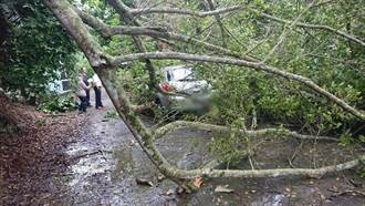 泰山、三峽路樹倒塌駕駛驚險劫 警管制疏導交通