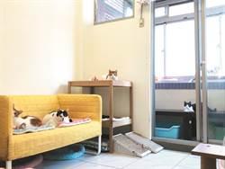 三十七隻貓的搬家大事