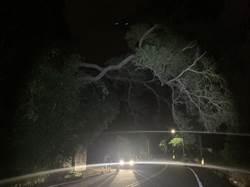 頭份分局斗坪所協助處理暴雨倒樹