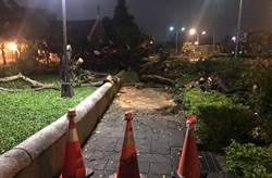 連日豪雨 台中公園二榕樹倒塌已排除