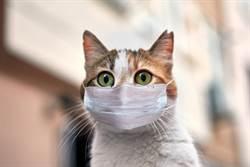 研究證實貓會感染新冠病毒