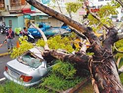 台南路樹壓毀2車 健檢聲起