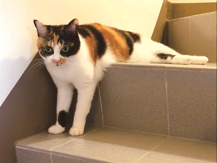 貓咪是不按牌理出牌,喜歡唱反調的動物,你越用心準備的它越不領情。(圖/四塊玉文創提供)