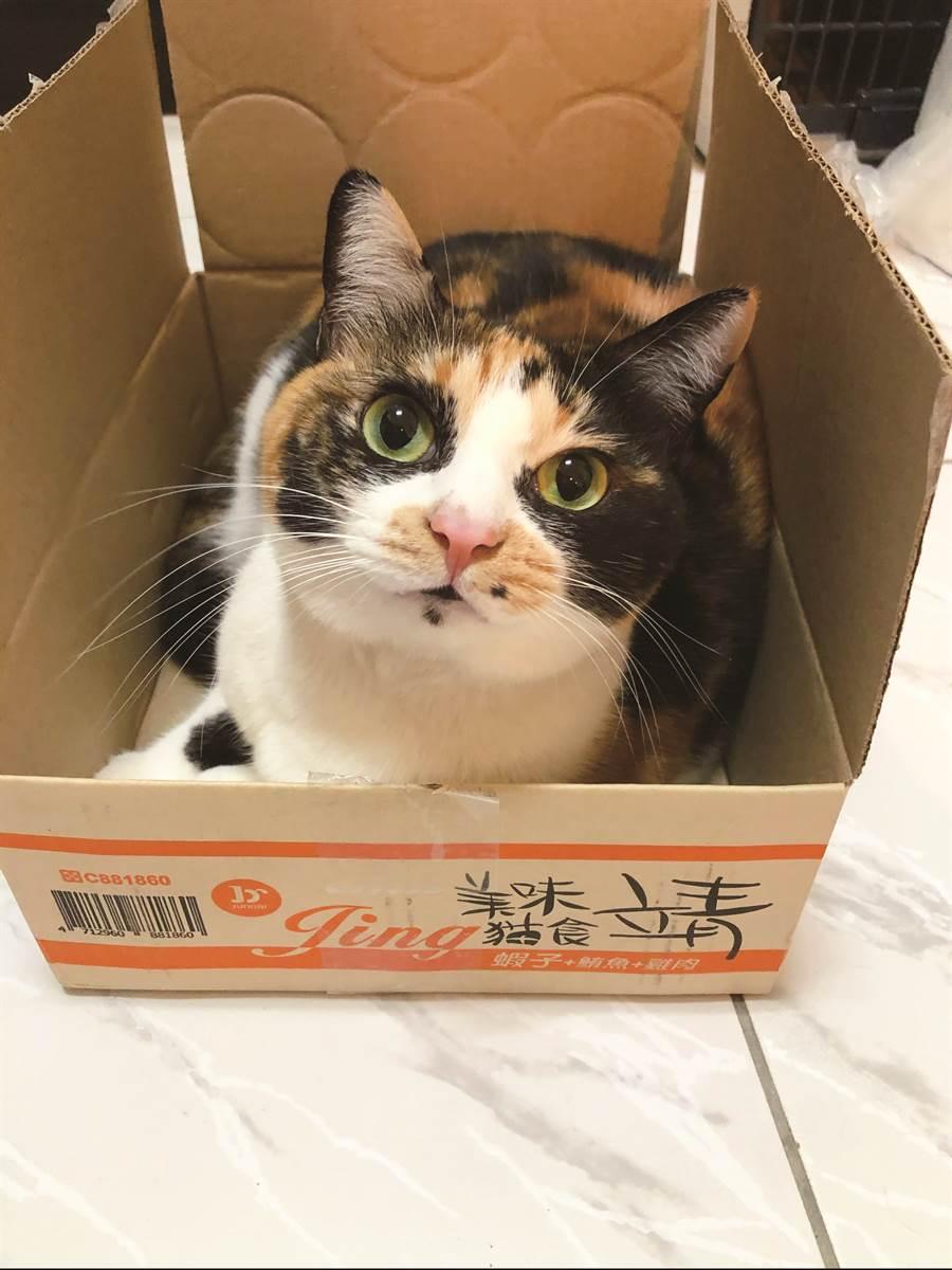 在這榮重介紹全世界貓咪最喜歡的玩物-紙箱。(圖/四塊玉文創提供)