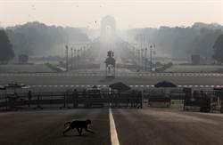 金害!印度一群猴子搶走新冠肺炎患者血液樣本