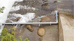 食水嵙溪虹吸式管狀魚道 復育台灣白魚見成效