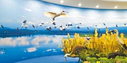 江西之腎 濕地文化島