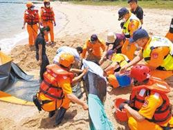 小鯨魚擱淺 澎湖岸巡隊成功救援