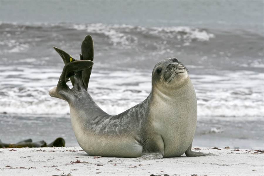 海豹驚變瑜珈大師 軟Q筋骨網看呆(示意圖/達志影像)