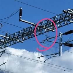 錦蛇想吞幼鳥觸電 釀台鐵東幹線斷電大誤點