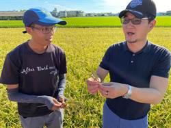 一期水稻採收期遇災 農民憂來不及報救助