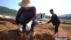 陸考古團隊發現南島語系民族源自中國東南沿海