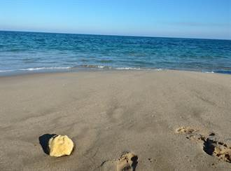 男童海邊撿到神秘怪石 專家一看驚呼:這2百萬