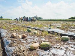 天災救助 農業保險雙軌並行