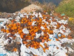 加工不及 河床一堆爛芒果