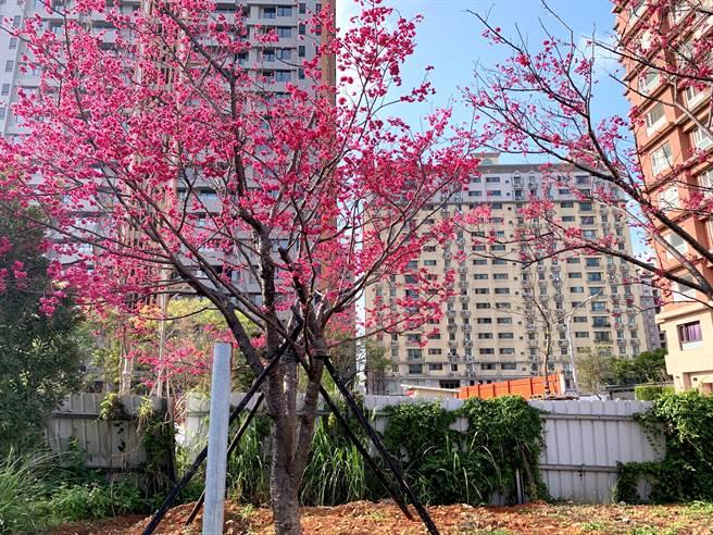 福樺建設只要看見美觀的植物樹種,就會先購買回自行預做植栽。/圖業者提供