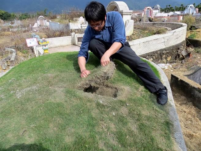盜墓者以鐮刀切割韓國草揪起後盜挖(圖片取自/中時資料庫)