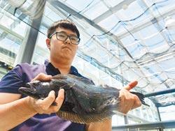 國內繁殖比目魚 順利技轉將上市
