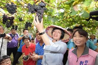 大村巨峰葡萄成熟了 來摘葡萄順便享用葡萄雞
