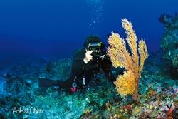 綠島柳珊瑚 海底展風姿