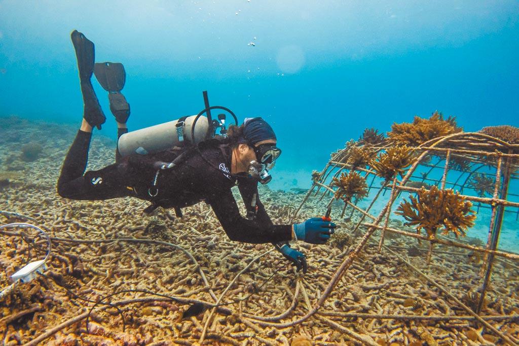 寶珀表力推「寶珀心繫海洋」計畫,為保育海洋生態盡心力。(Blancpain提供)