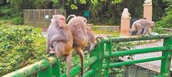 台東超酷工作 2萬3800徵驅猴人