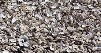 1.6億公斤蚵殼製成棉紗 衣十五創新技術挺環保
