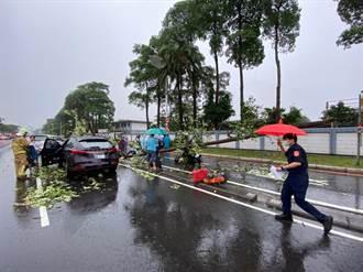 大雨強風襲小港 樹塌砸傷4人無大礙