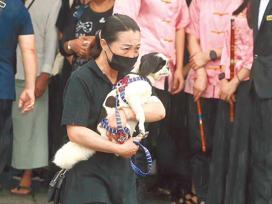 吳朋奉生前最愛的狗「碰碰」,被前主人帶到告別式送他最後一程。(粘耿豪攝)
