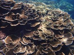 墾丁觀光回溫!遊客潛水踩爆珊瑚 網怒:太扯了