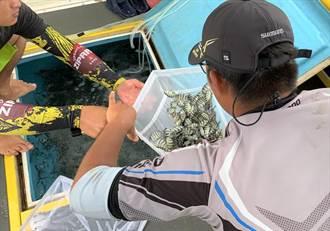 澎湖海銀生物研究中心放流千顆海膽及萬尾條石鯛