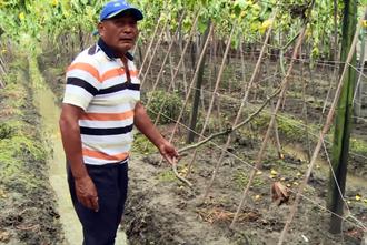 彰化農民絲瓜田遭破壞 損失近20萬元