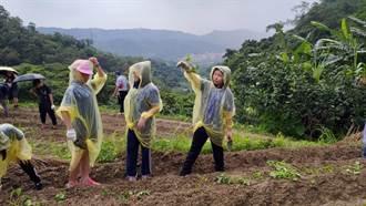 深坑農會助弱勢生  連續十年「種地瓜送愛心」
