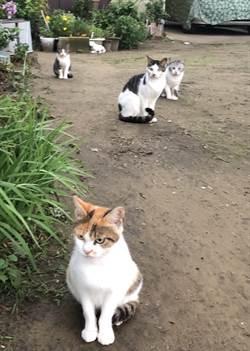 日本北九州的貓島  毒死多隻貓的兇手現形