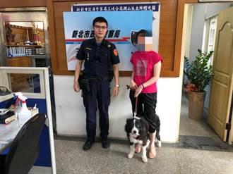 三峽分局細心警助民 尋回離家汪星人
