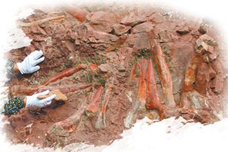 重慶出土新化石 填恐龍演化空白