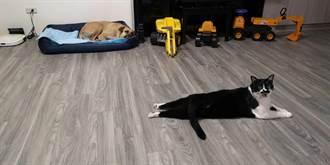 抽菸引火害死貓狗 鄰居痛心但不准精神賠償