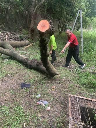 敎育電台關子嶺站員工鋸樹不慎被壓傷 急救後不治