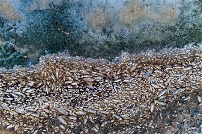 天空下「魚雨」的國家!成千上萬條魚從天而降(示意圖/達志影像)