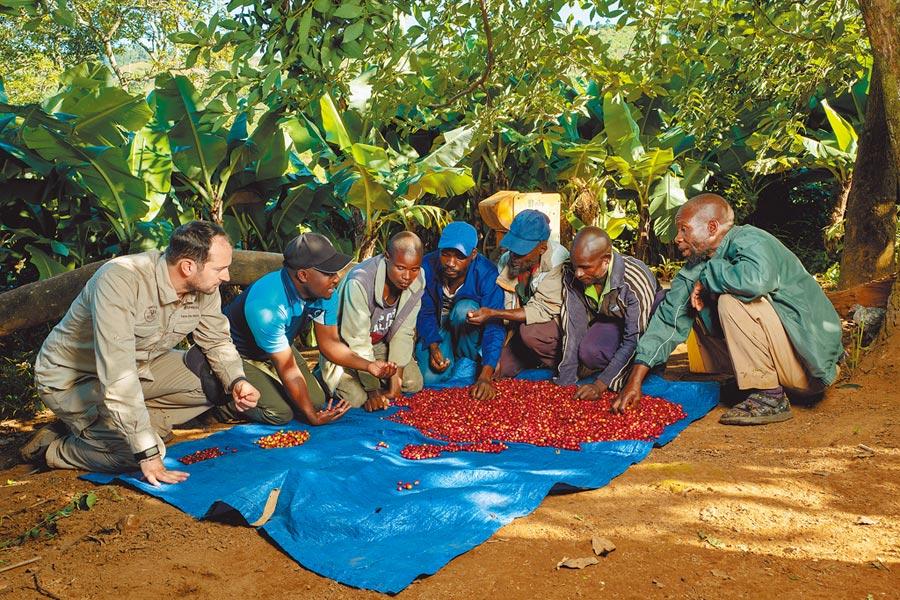 Nespresso自2003年起與雨林同盟合作,在全球14個國家發展「AAA永續品質計畫」,提升咖啡農的生活及福祉,也能穩定高品質的咖啡豆來源。(Nespresso提供)