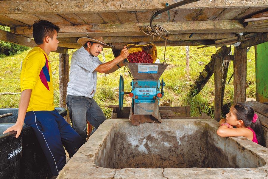 居住在哥倫比亞的Don Fernando,現透過「AAA永續品質計畫」,不僅可養活家庭,更能傳承傳統技術與新的永續性農業實務。(Nespresso提供)