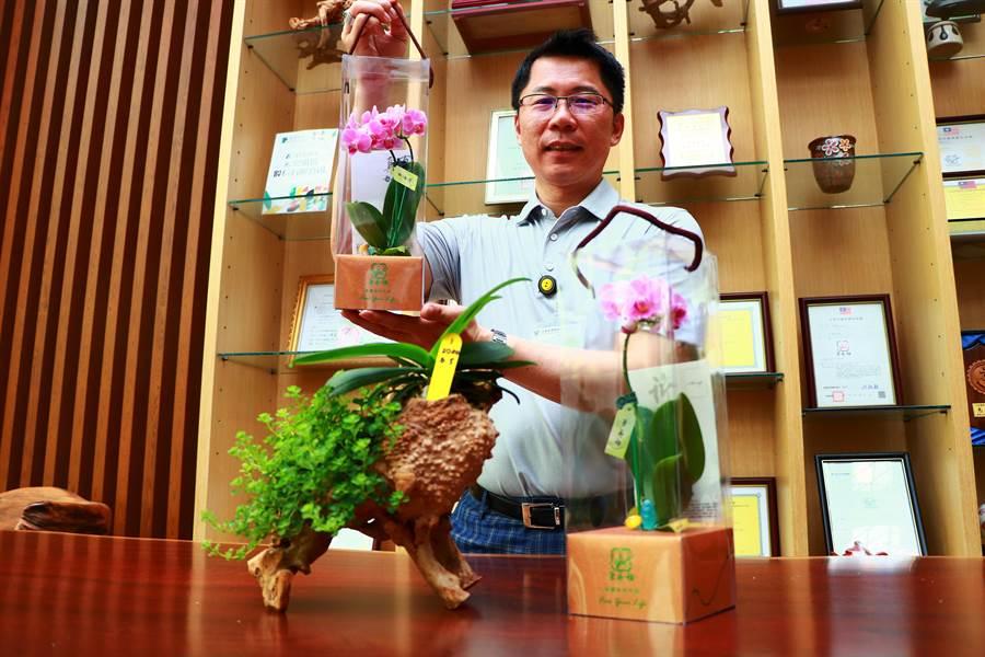 潮州蘭花業者林畯騰積極經營「蘭藝坊」品牌,以商品特殊化如結合木藝品等,將蘭花變成藝術品擺設或是生活用品,藉此擴展國內蘭花市場的需求量。(謝佳潾攝)