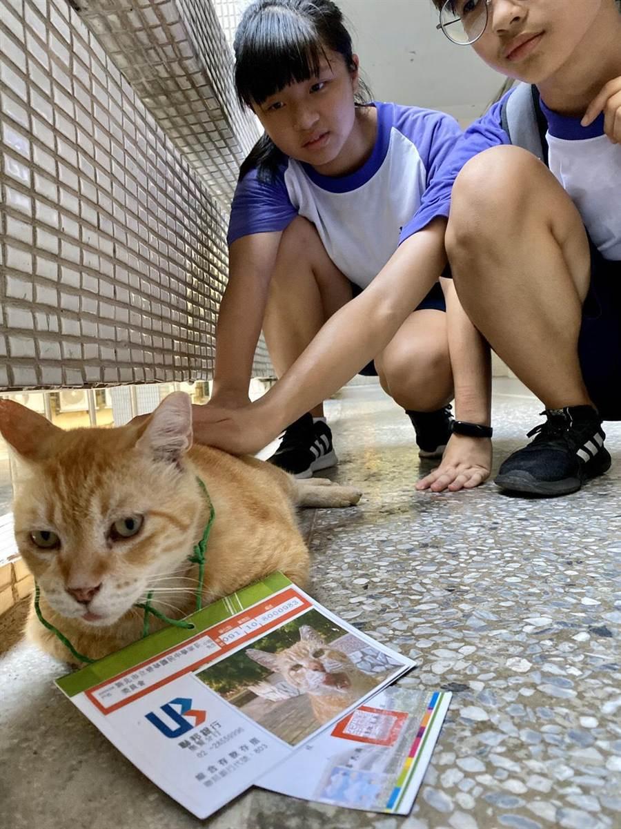 碧華國中校貓「阿肥」,為全校師生的療癒師。(新北市教育局提供/賴彥竹新北傳真)